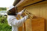 Nový Jičín má svůj med