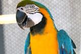 Přijďte se do ZOO Tábor rozloučit s prázdninami, připraveny jsou hry pro děti i křest papoušků