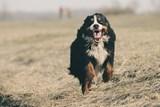 Sáčky na psí exkrementy neslouží jako obal na svačinu