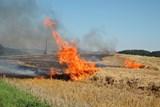 K požáru pole vyjelo 5 jednotek hasičů