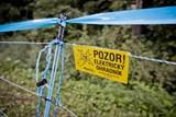 Ve zlínském kraji se instalují elektrické ohradníky na zabránění migrace divokých prasat