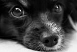 Městská kamera odhalila hrubé zacházení se štěnětem psa