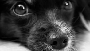 Valašské Meziříčí chce podpořit adopce psů z útulku