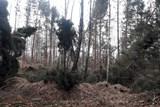 V oblastech Kristiánov a Albrechtice-Dětřichov je zakázán vstup do lesů