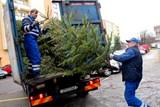 Sběr vánočních stromků bude zahájen ve Zlíně první lednové pondělí 2019