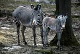 Zoo Brno přivítala první mládě roku 2018