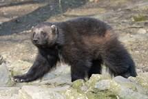 Jarní prázdniny v ústecké zoo
