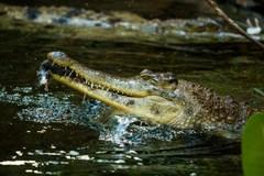 Jaro v zoo – zahájení komentovaných setkání u zvířat