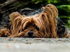 Psí den nabídne ukázku psích sportů či možnost očipovat psa