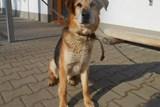 Tisíce šťastných psích návratů díky městskému útulku