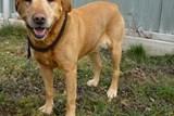 Z bezpečnostních důvodů končí služba venčení psů umístěných v útulku