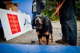Možnosti bezplatného očkování svých psů využily dvě desítky lidí bez domova