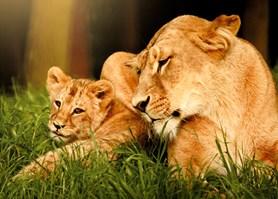 Zoo Brno přenesla divočinu do nákupního centra