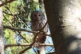 Vojenští lesníci staví na Šumavě speciální budky pro vzácnou vyhynulou sovu