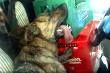 Obušek strážníků zachránil život třem psům uvězněným v uzamčeném vozidle