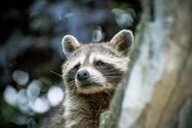 ZOO Tábor nabídne o následujících dvou sobotách návštěvníkům oblíbené noční prohlídky