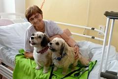 Dobrovolníci v Uherskohradišťské nemocnici vracejí pacientům chuť do života i s pomocí pejsků