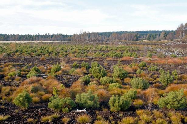 Popis: Zarůstající těžená plocha Perninského rašeliniště 2017.