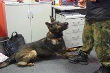 Dvacet psů hledalo na radnici drogy
