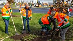 Pražské služby vysadí téměř 70 nových stromů a další budou následovat