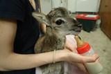 Pražané loni pomohli zachránit rekordní počet volně žijících zvířat