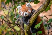 Úspěšný rok Zoo Praha