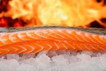 Losos jako zdroj omega-3 kyselin nestačí
