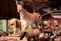 V únoru máte poslední možnost vidět v Národním muzeu výstavy Archa Noemova a Světlo a život