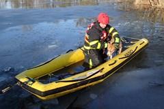 Karvinští hasiči zachránili psa, propadl se ledem a skončil na ostrůvku