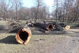 Háječek se zbavil nebezpečných stromů, na jaře začne nová výsadba
