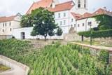 Na jaře začnou sanace svahu Rajské vinice