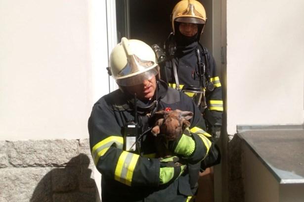 Popis: Zasahující hasič se zachráněným králíkem.