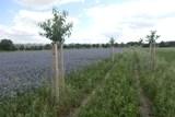 Praha obnovuje meze a remízky. Končí s pěstováním monokultur na svých polích