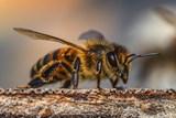 Nepodceňujte ochranu před bodnutí hmyzem ani klíšťaty, počet nakažených roste
