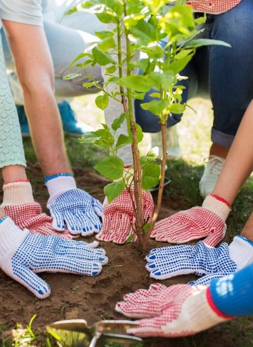 Středočeský kraj přispěje obcím na každý vysazený strom 1 500 korun