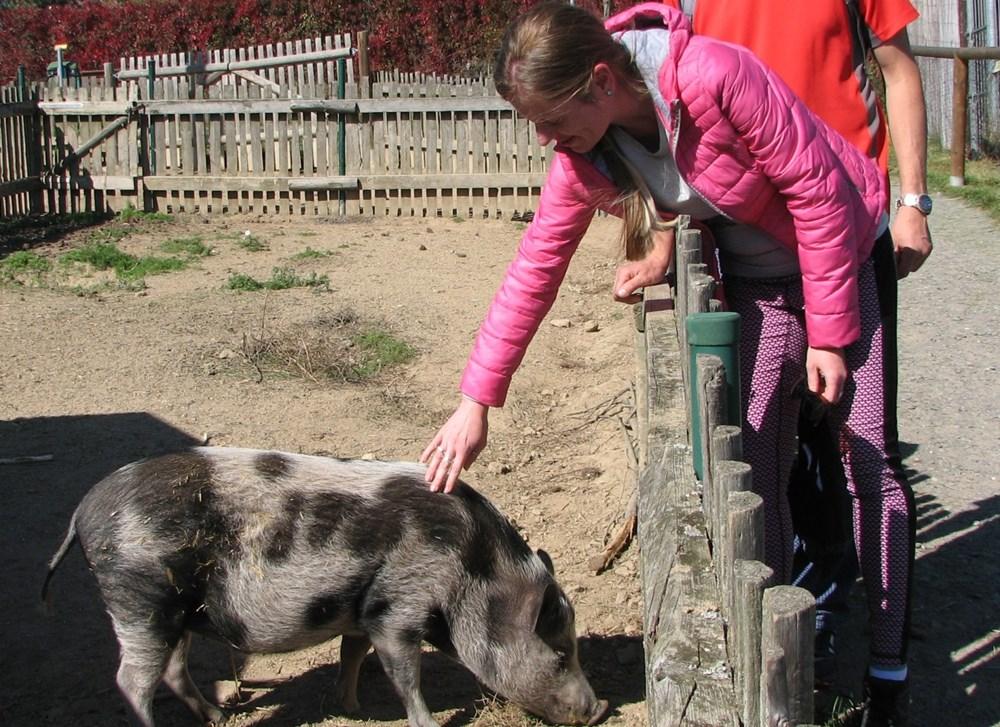 Popis: Silvie Rokosová pravidelně jezdí do ZOO Tábor nejen za adoptivním Čunimírem, prasátkem göttingenským, kterého dostala jako originální dárek