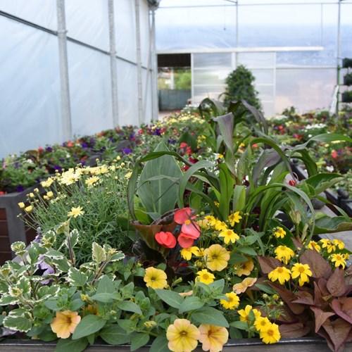 Znojmo inspiruje. Městská zeleň chystá květiny pro Vyškov