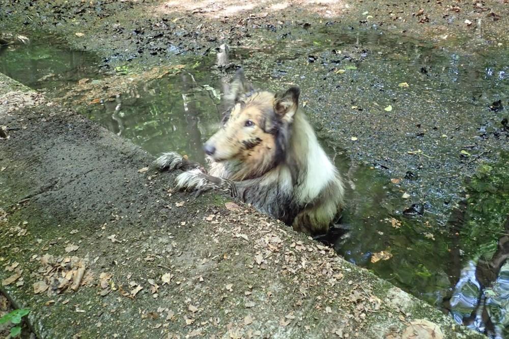Popis: Záchrana psa z bažiny.