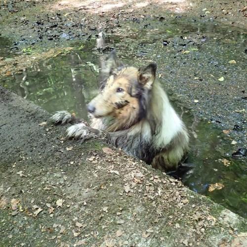 Hasiči zachraňovali domácí mazlíčky