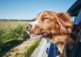 Cestujete se psem? Nezapomeňte přibalit vodu a zaregistrovat čip