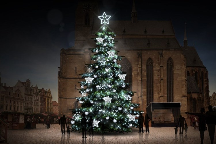 Plzeňáci mohou darovat městu vánoční strom a vybrat si jeho ozdoby