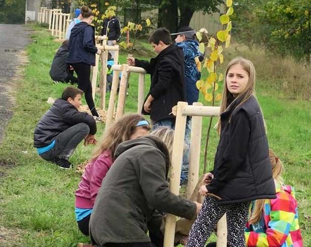 Popis: Děti ze sedmé třídy zbirožské základní školy se staly patrony jednotlivých stromů.