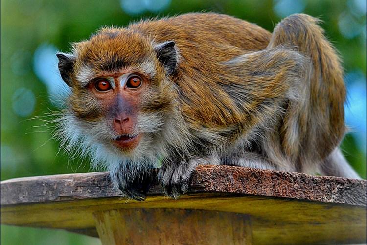Zvířata v táborské zoologické zahradě můžete nově podpořit také na HitHitu
