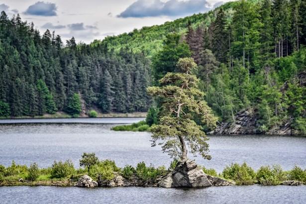 Popis: Chudobínská borovice roste na skalnatém výběžku levého břehu Vírské přehrady.