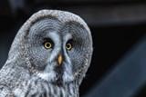 Jsou sovy skutečně moudré? Jak dobře vidí v noci? Odpovědi přinese Soví noc