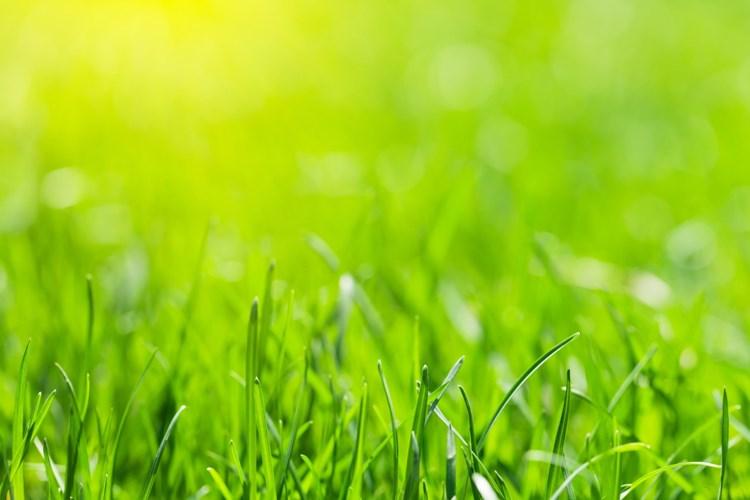 Technické služby vyjedou na trávu s novou sekačkou